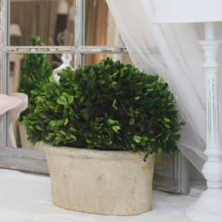 Bosso stabilizzato vaso ovale grande all white for Bosso vaso